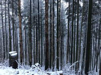 Lindenfelser Wald